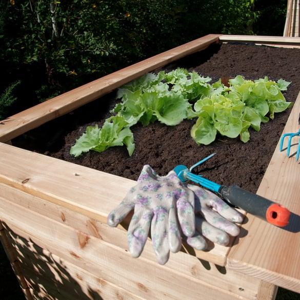 Hochbeete: Richtig bepflanzen<br>und pflegen.